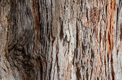 Tree bark details Stock Image