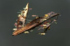 Tree bark with dried leaves floating on the surface Stock Image