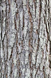 The tree bark is dry Royalty Free Stock Photo