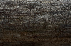 Tree without bark. Dry tree without bark, food and house for insects Royalty Free Stock Images