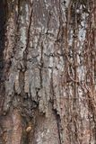 Tree bark, dry parts of the tree Stock Photo