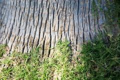 Tree bark entwined with green grass. Texture of natural natural background. Place for text and image. Tree bark entwined with green grass. Texture of natural stock images