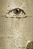 Tree bark with eye design Stock Photography