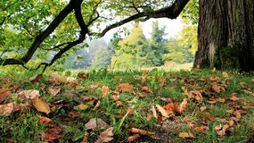 Tree Bark And Falling Autumn Leaves. Season change Autumn. colorful of falling leaves and tree bark in Germany stock image
