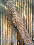 Tree Bark Fence Abstract Royalty Free Stock Photo