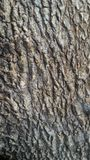 Tree bark. Fragment the cracked bark of the old tree Stock Photos