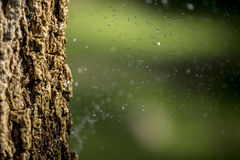 Tree bark in front of sprinkle. Royalty Free Stock Images