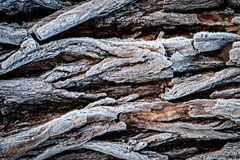Tree bark with frost Royalty Free Stock Images