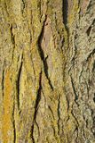 Tree Bark with Gold Yellow and Green Moss Stock Photos