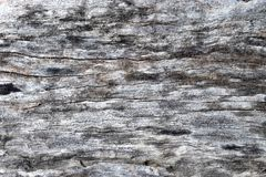 Tree bark. Gray texture background with old age Stock Image