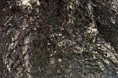Tree bark. Gray texture background with old age Stock Photography