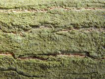 Tree bark with green lichen Stock Photo