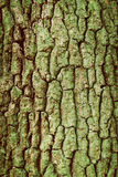 Tree Bark Green Texture,Pattern,Wooden,Toned Royalty Free Stock Photos