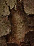 Tree bark with hole. In the photo is tree bark with hole. Photo was made in the forest Stock Photography