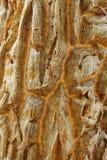 Tree bark Stock Images