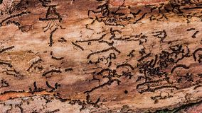 Tree bark with irregular patterns royalty free stock images