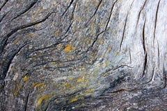 Tree bark and lichen Stock Photos