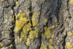 Tree bark with lichen Stock Image