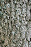 Tree Bark with Lichens Royalty Free Stock Photos