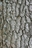 Tree Bark with Lichens Stock Photography