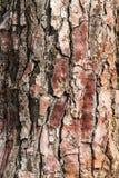Tree bark. Macro of a brown bark of tree Stock Photography
