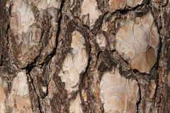 Tree Bark Macro. Macro of a conifer's peeling and multicoloured bark texture stock images