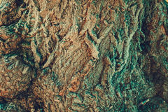 Tree Bark Macro. Old tree bark, close up texture as natural background Royalty Free Stock Photos