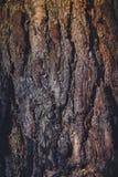 Tree Bark Macro Retro Royalty Free Stock Images