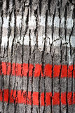 Tree bark marked with red and white color Royalty Free Stock Images