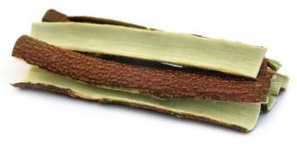 Tree bark of Medicinal Neem Royalty Free Stock Image