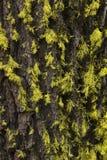 Tree Bark Moss Stock Photo