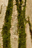 Tree Bark Moss Stock Images