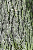 Tree bark. Royalty Free Stock Photography