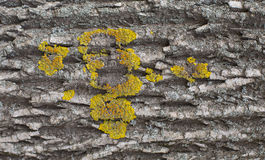Tree bark with moss Royalty Free Stock Photo