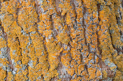 Tree bark with moss background Stock Photos