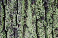 Tree bark with moss 7730 Stock Photos