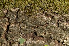 Tree bark with moss texture Stock Photos
