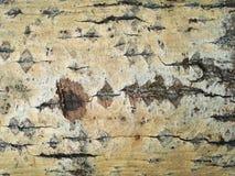 Tree bark. Natural background stock photo