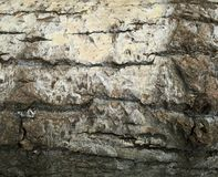 Tree bark. Natural background stock images