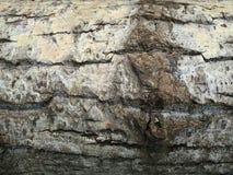 Tree bark. Natural background royalty free stock photos