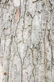 Tree bark a natural texture and background Royalty Free Stock Photos