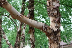 Tree Bark Nature Detail Royalty Free Stock Images
