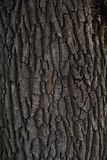 Tree bark in nature Stock Image