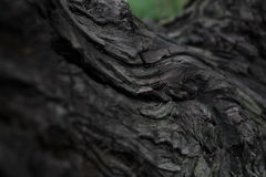 Tree bark. A neutral background to Your working table and no concept. It`s simple - the bark of the tree and blurred background Stock Photo