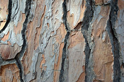 Tree bark of old tree simple detail texture Royalty Free Stock Photos