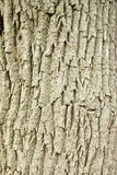 Tree bark pattern. Tree bark and wood pattern for background use Royalty Free Stock Photo