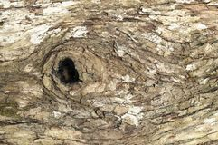 Tree Bark Pattern Background Royalty Free Stock Images