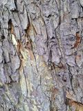 Tree Bark Pattern Background Royalty Free Stock Photos