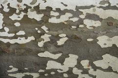 Tree bark pattern. Showing texture for background Royalty Free Stock Photos