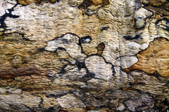 Tree bark pattern and texture Royalty Free Stock Images